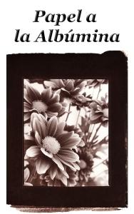 Icono Papel a la Albúmina
